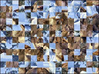 Biélorusse puzzle №119062
