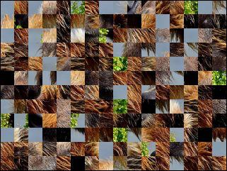 Biélorusse puzzle №170372