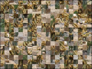 Biélorusse puzzle №40012
