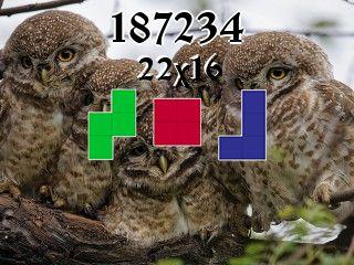 Puzzle полимино №187234