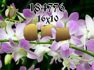 Puzzle №184776