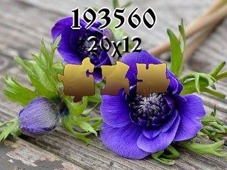 Puzzle №193560