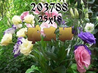 Puzzle №203788