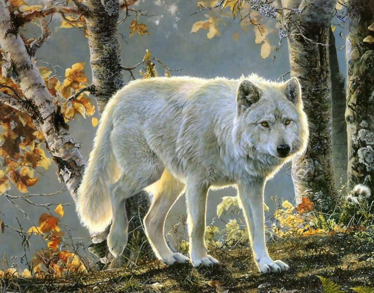 Puzzle Recueillir des puzzles en ligne - White wolf