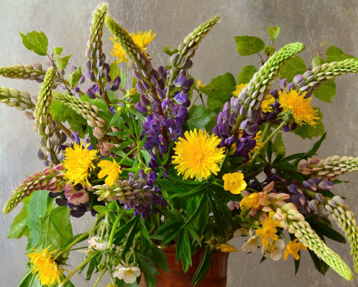 Puzzle Recueillir des puzzles en ligne - A bouquet of lupines