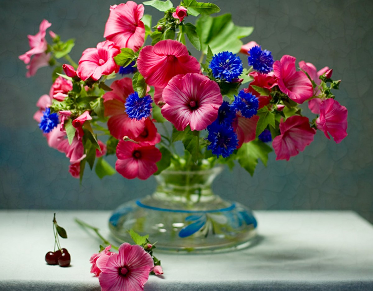 Puzzle Recueillir des puzzles en ligne - Lavatera and cornflowers