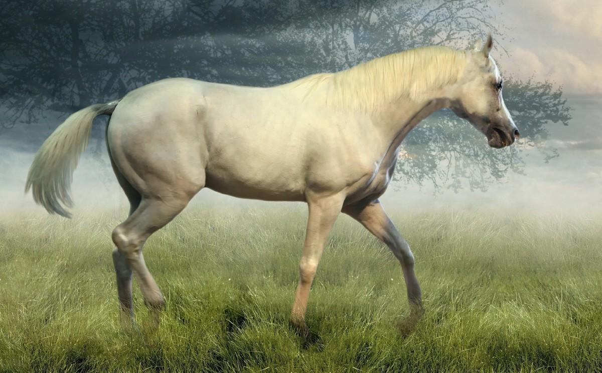 Puzzle Recueillir des puzzles en ligne - Horse in the mist