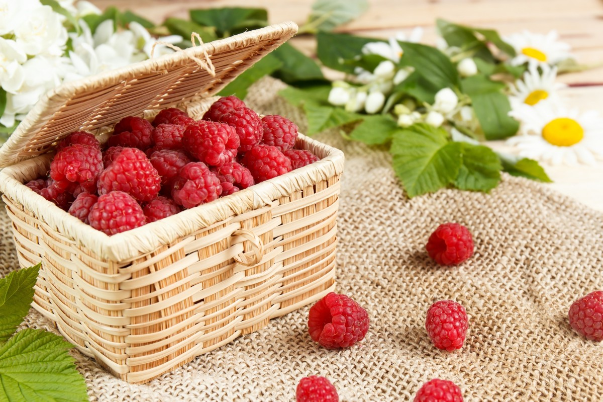 Puzzle Recueillir des puzzles en ligne - Raspberries in the basket
