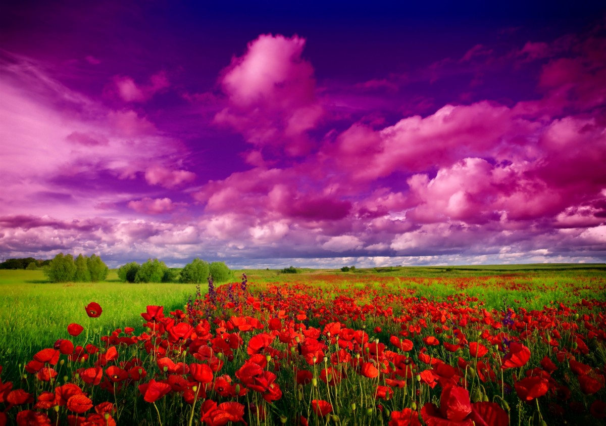 Puzzle Recueillir des puzzles en ligne - Purple heaven