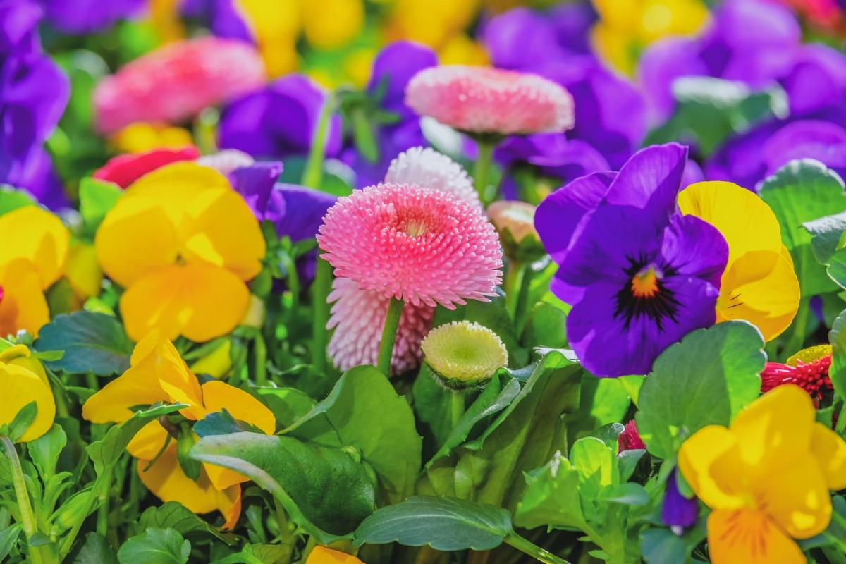 Puzzle Recueillir des puzzles en ligne - Colorful flower garden