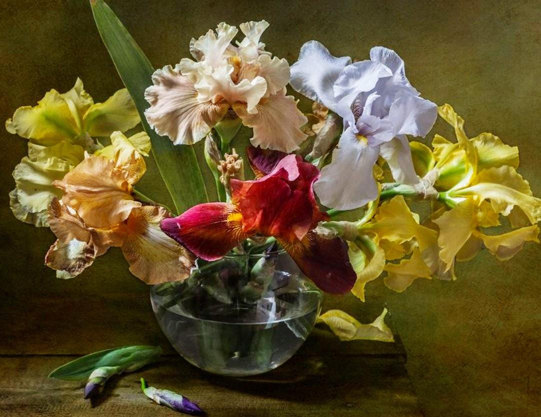 Puzzle Recueillir des puzzles en ligne - Colored irises