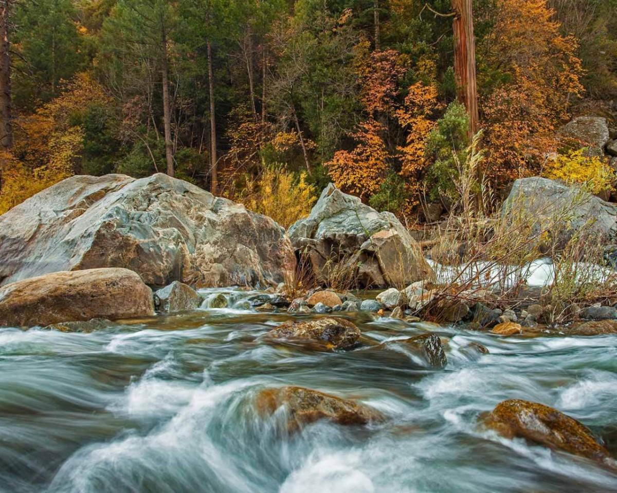 Puzzle Recueillir des puzzles en ligne - River and autumn forest
