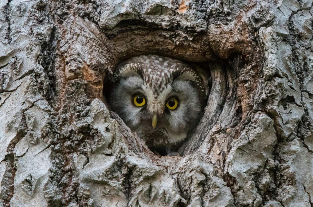 Puzzle Recueillir des puzzles en ligne - Owl at home