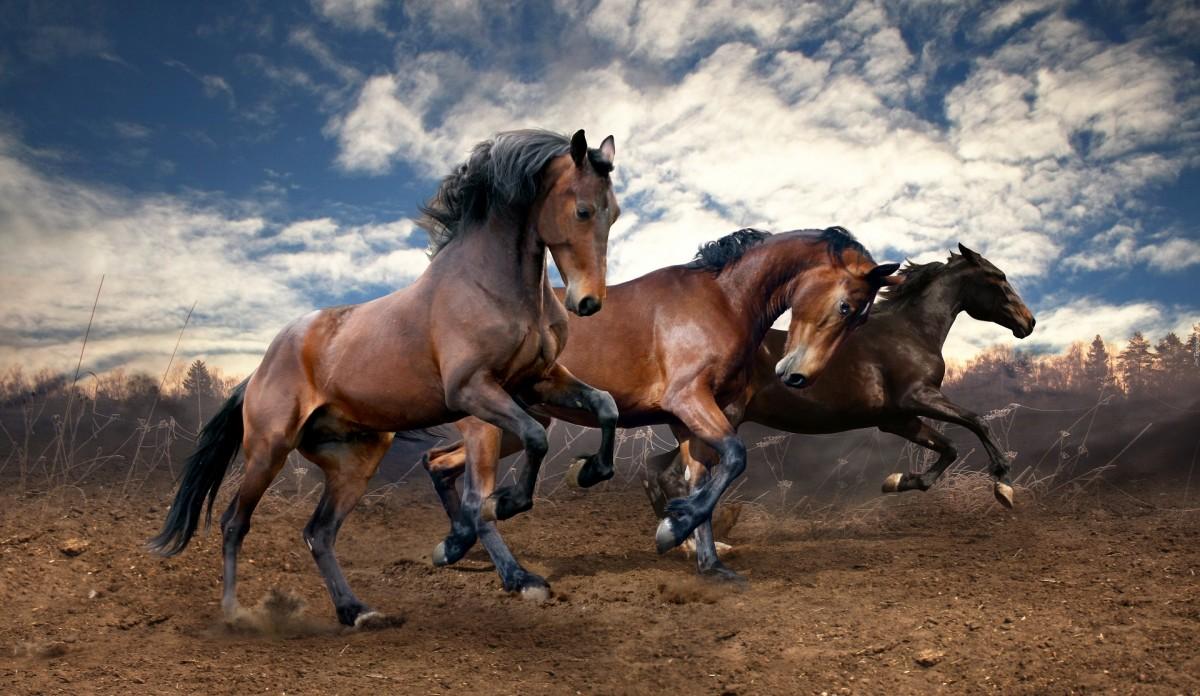 Puzzle Recueillir des puzzles en ligne - Three horses