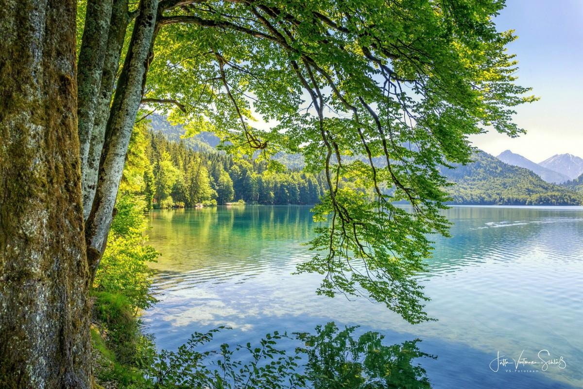 Puzzle Recueillir des puzzles en ligne - Branches over water