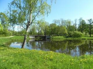 Собирать пазл Birch pond онлайн