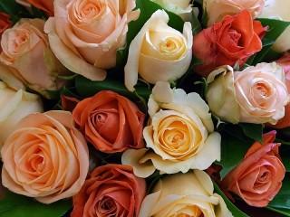 Собирать пазл Bouquet of roses онлайн