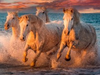 Собирать пазл Four horses онлайн
