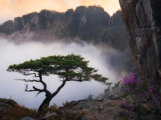 Собирать пазл Tree in the fog онлайн