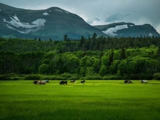 Собирать пазл The horses in the field онлайн