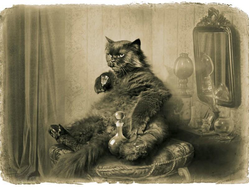 Puzzle Recueillir des puzzles en ligne - Behemoth the cat