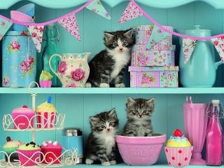 Собирать пазл Kittens on a shelf онлайн