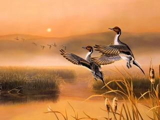 Собирать пазл Flying ducks онлайн