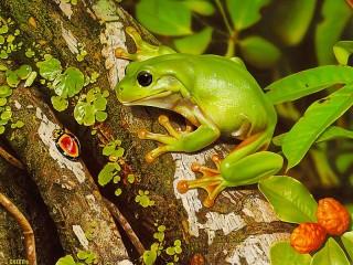 Собирать пазл The frog and the beetle онлайн