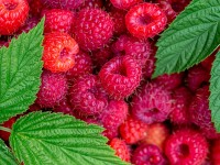 Собирать пазл Raspberry онлайн