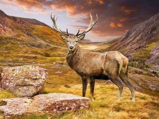 Собирать пазл Deer in the mountains онлайн