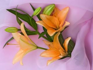 Собирать пазл Orange lilies онлайн