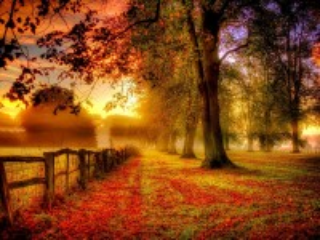 Собирать пазл Autumn fence онлайн