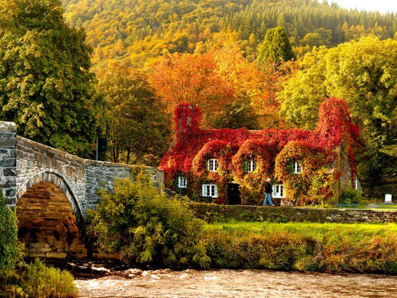 Puzzle Recueillir des puzzles en ligne - Autumn ivy