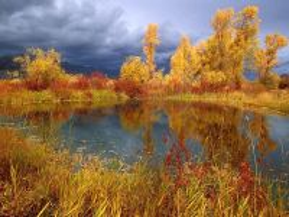 Собирать пазл Autumn pond онлайн