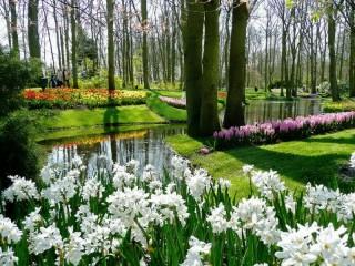 Собирать пазл Park flowers онлайн