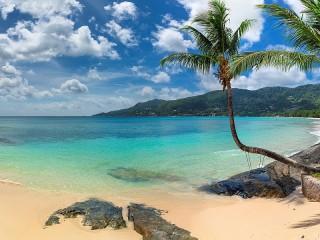 Собирать пазл Beach and palm trees онлайн