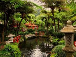 Собирать пазл Portugal nerd garden онлайн