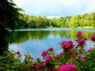 Собирать пазл Pond and forest онлайн