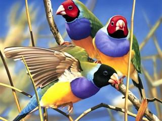 Собирать пазл Birds on a branch онлайн