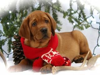 Собирать пазл Dog in scarf онлайн