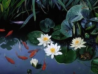 Собирать пазл Fish among lotuses онлайн