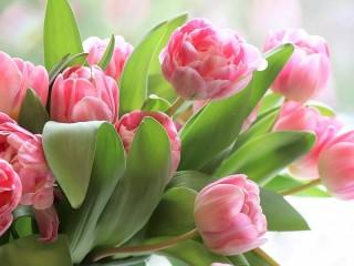 Собирать пазл Pink tulips онлайн