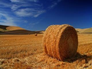 Собирать пазл Haymaking онлайн