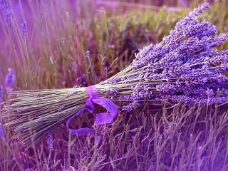 Собирать пазл Lilac bouquet онлайн