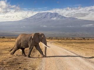 Собирать пазл Elephant in front of mountains онлайн