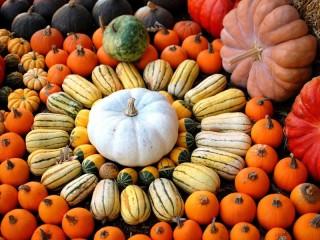 Собирать пазл Pumpkins онлайн