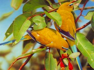 Собирать пазл Herbal parrot онлайн