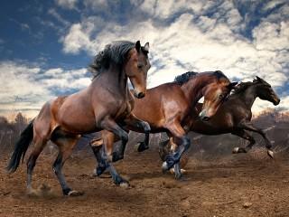 Собирать пазл Three horses онлайн