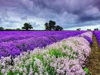 Собирать пазл Flower field онлайн