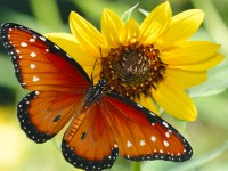 Собирать пазл Flower and butterfly онлайн